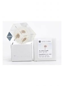 Dandelion Enclosed in Clear Acrylic Resin Cube and Packaging