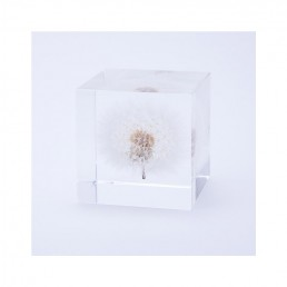 Large Dandelion Enclosed in Clear Acrylic Resin Cube